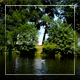 Seagull Sits Down On Water City Park - VideoHive Item for Sale