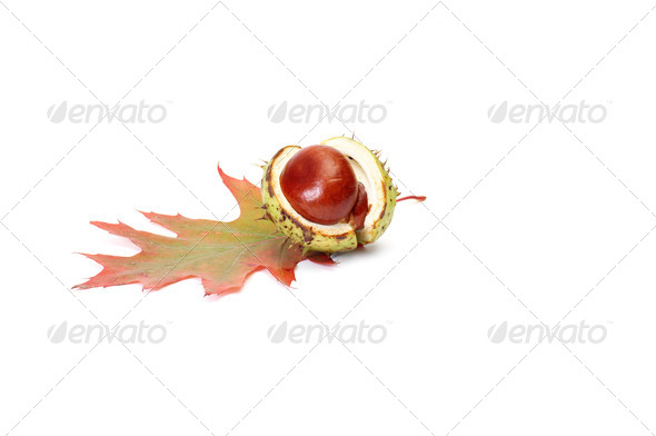 Wonderful chestnut and leaf on a white. - Stock Photo - Images