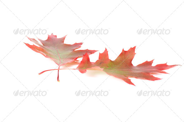 Splendid colorful leaves. - Stock Photo - Images