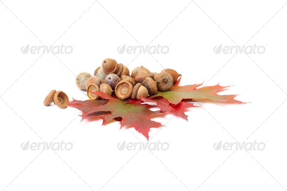 Splendid autumn leaves and acorns on a white. - Stock Photo - Images