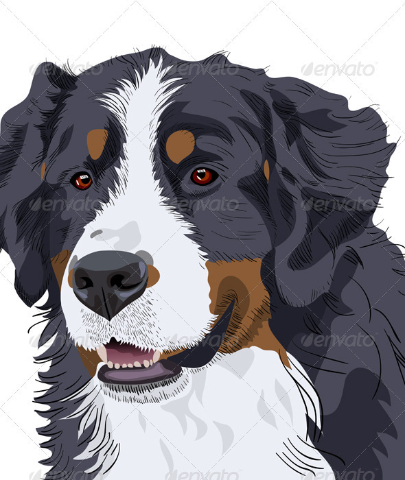 Bernese Mountain Dog breed - Animals Characters