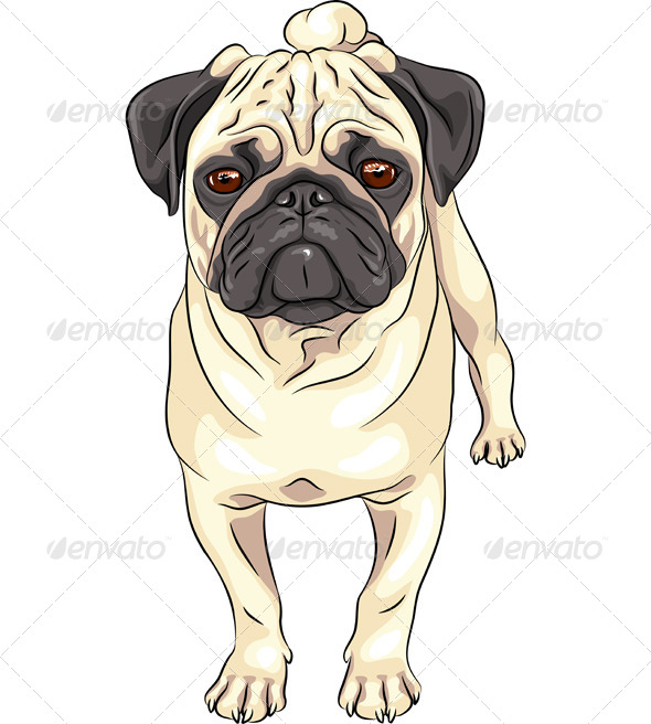 Vector Sketch Dog Pug Breed  - Animals Characters