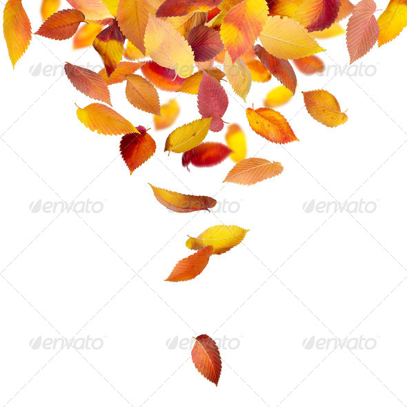 Leaves falling from above - Stock Photo - Images