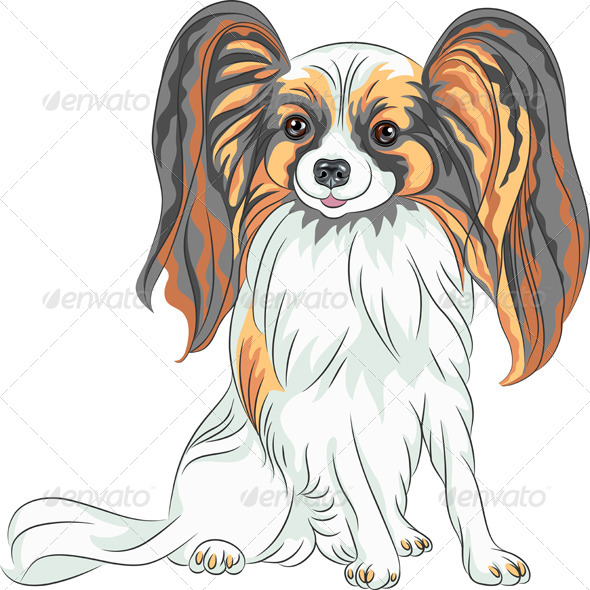 Papillon Dog Breed - Animals Characters