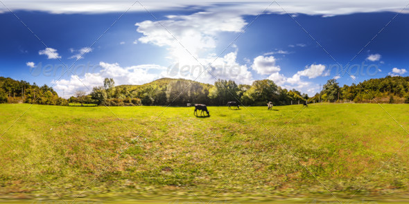 HDRI Grazing Cows Under Blue Sky - 3DOcean Item for Sale