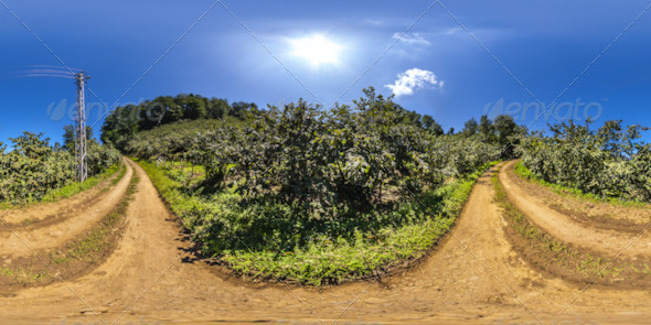 HDRI Hazelnut Plantations In The Pathway Between - 3DOcean Item for Sale