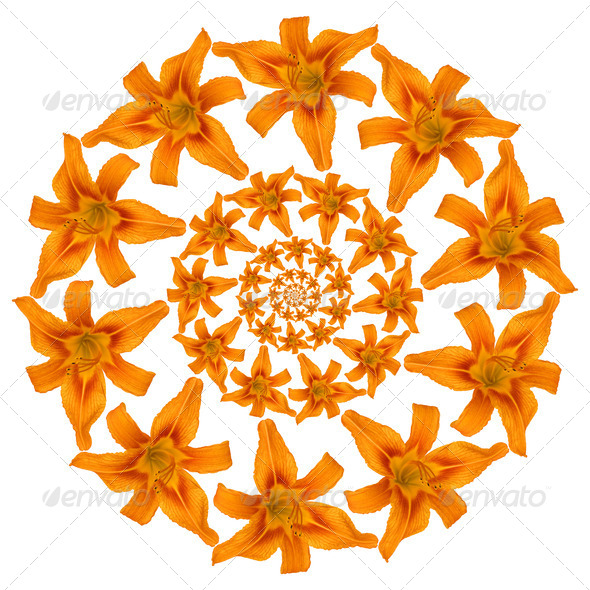 Tiger Lily Pattern - Stock Photo - Images
