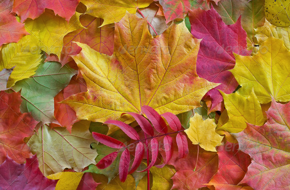 Autumn Leaves Background - Stock Photo - Images