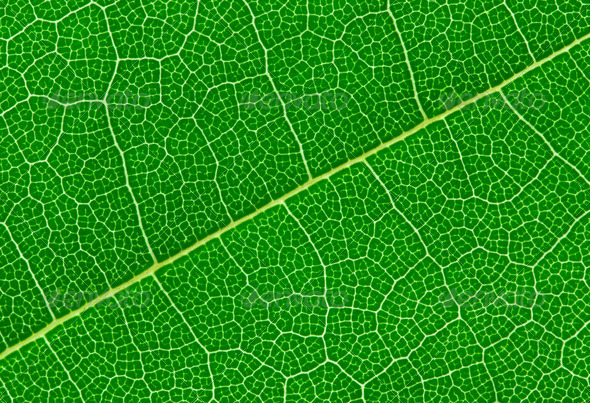 Detailed Green Leaf - Stock Photo - Images
