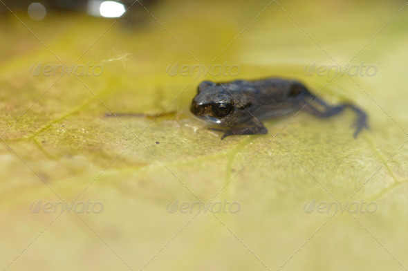 Young Toad - Stock Photo - Images