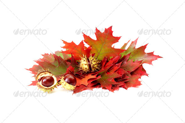 Wonderful autumn leaves and chestnuts on a white. - Stock Photo - Images