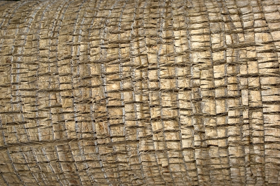 palm tree bark surfaces texture backgrounds by artremizov