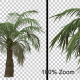 Small Palm Tree Alpha Channel - VideoHive Item for Sale