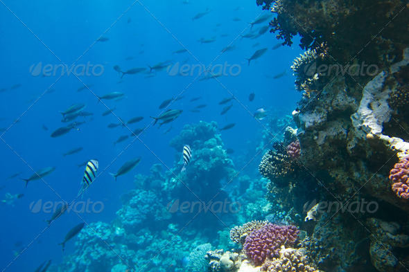 coral colony on a reef  - Stock Photo - Images