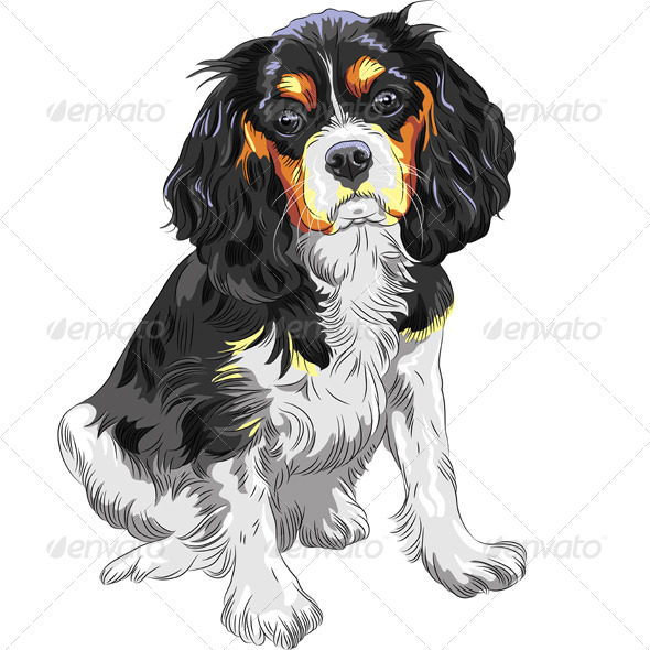 Dog Cavalier King Charles Spaniel Breed - Animals Characters