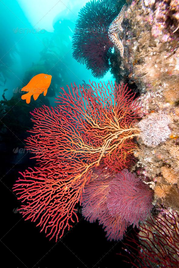 California underwater reef - Stock Photo - Images