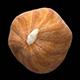 Hazelnut kernel - 3DOcean Item for Sale