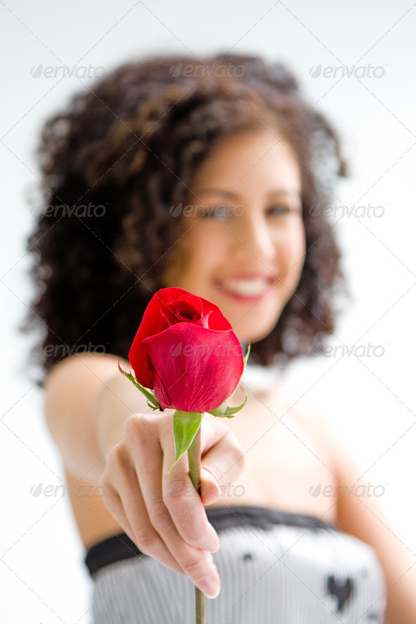 Presenting red rose - Stock Photo - Images