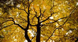 Autumn High Lights