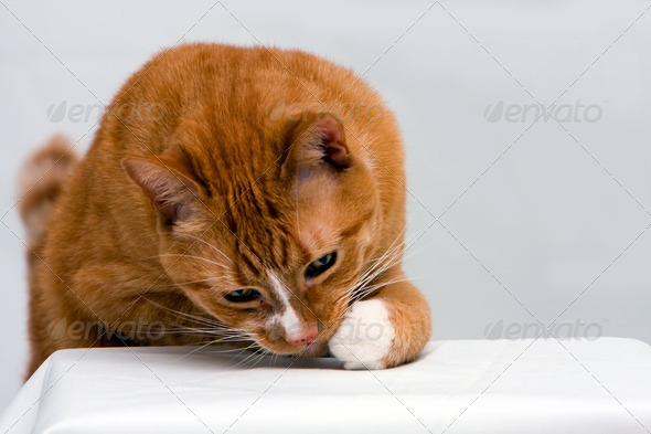 Curious cat - Stock Photo - Images