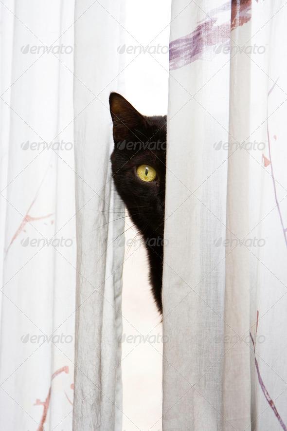 Peeking cat - Stock Photo - Images
