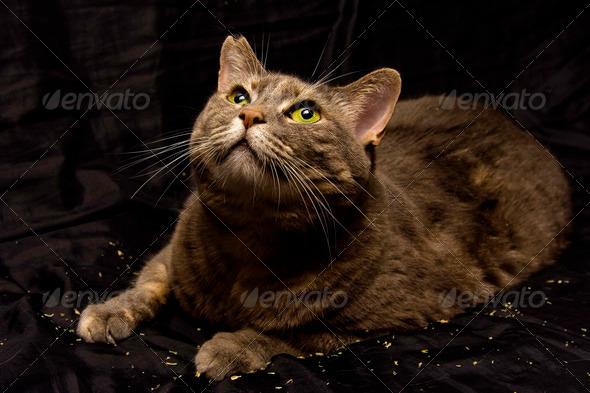 Curious cat - Stock Photo - Images