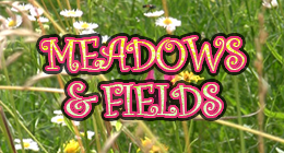 Meadows and Field