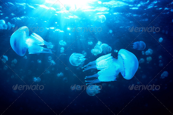Jellyfishes - Stock Photo - Images