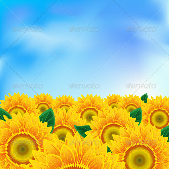Background with sunflower - Flowers & Plants Nature