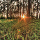 Sunset In A Pine Forest HDR Timelapse 2 - VideoHive Item for Sale