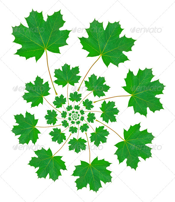 Maple Leaf Pattern - Stock Photo - Images