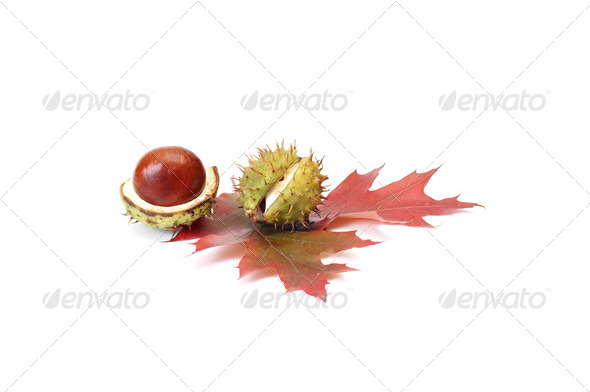 Colorful autumn leaves and chestnuts. - Stock Photo - Images