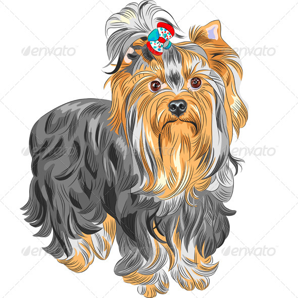 Vector Pedigreed Dog Yorkshire Terrier - Animals Characters