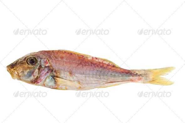 Salted and dried Red mullet fish - Stock Photo - Images