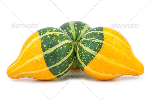 Three yellow-green fancy pumpkins - Stock Photo - Images