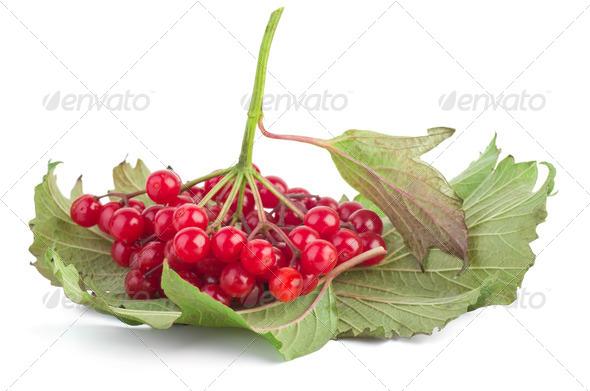 Viburnum berries - Stock Photo - Images