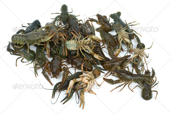 Pile of live crawfishes - Stock Photo - Images