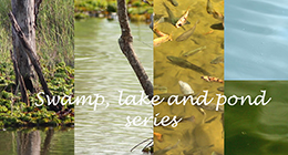 Swamp, Lake and Pond