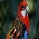 Parrot 7 - VideoHive Item for Sale