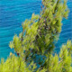 Pine Tree And Sea - VideoHive Item for Sale