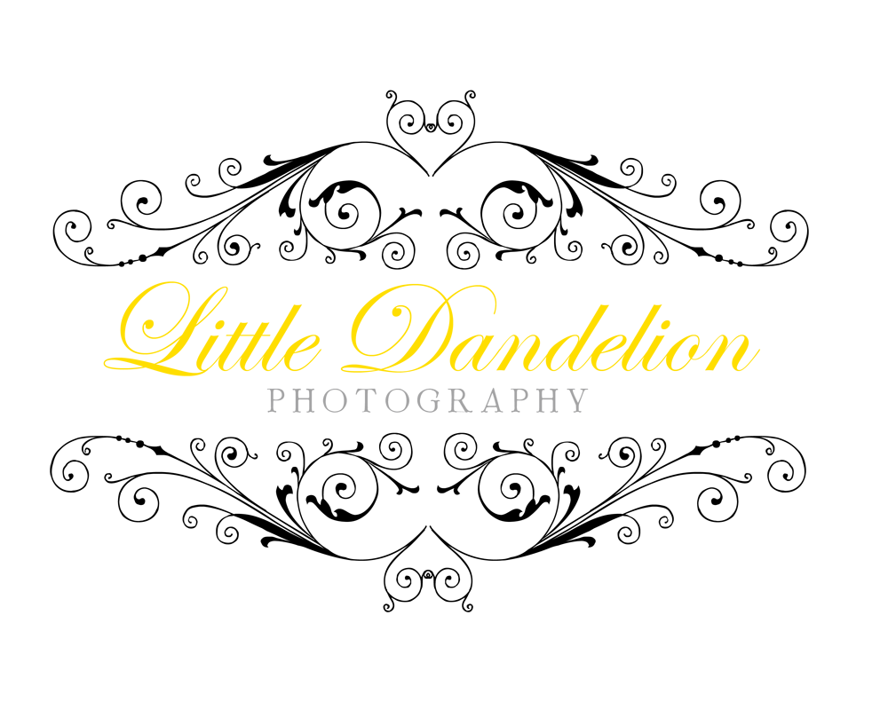 Little Dandelion Photography