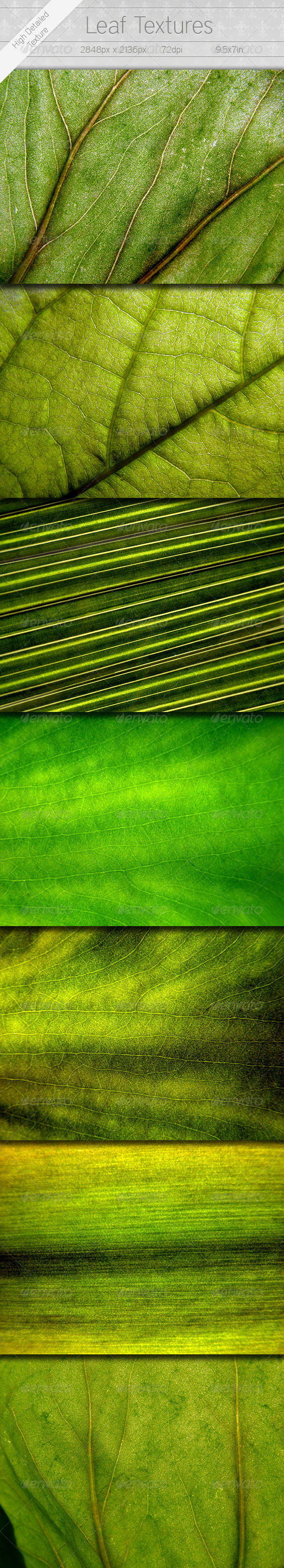 7 Leaf Textures - Nature Textures