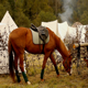 Horse - VideoHive Item for Sale