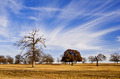 Cloud Formation and Blue Texas Sky - PhotoDune Item for Sale