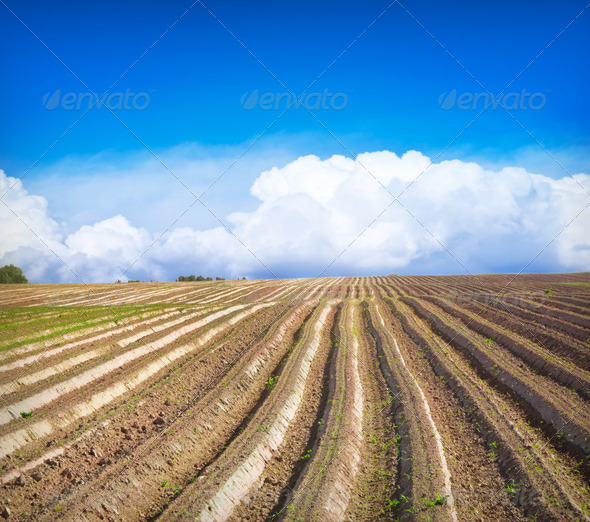 Green field Landscape - Stock Photo - Images