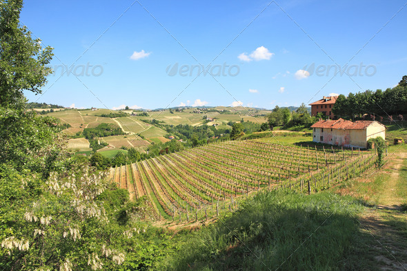 Hills and vineyards of Piedmont, northern Italy. - Stock Photo - Images