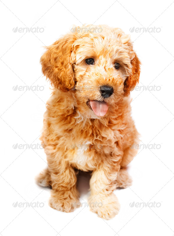 Puppy - Stock Photo - Images