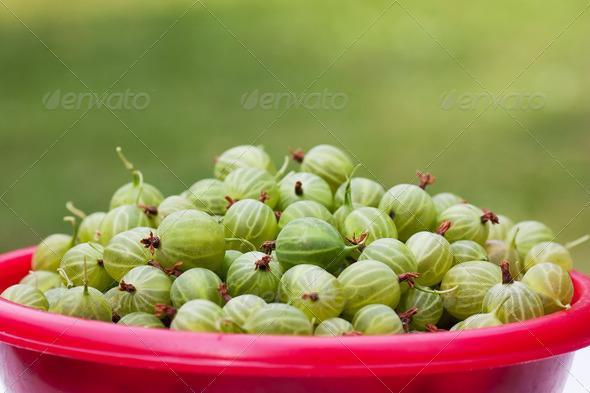 Gooseberries - Stock Photo - Images