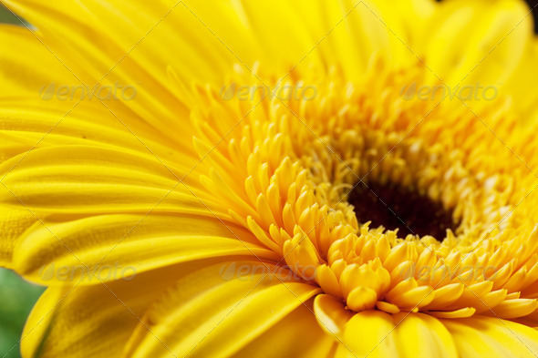A heart of flower - Stock Photo - Images