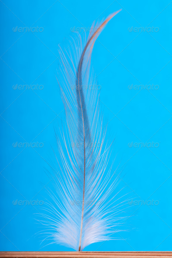 Feather - Stock Photo - Images
